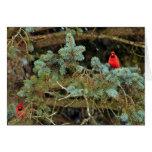 Tarjetas de nota de los cardenales