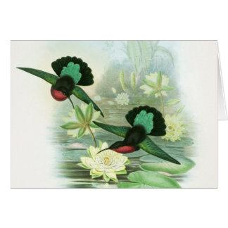 Tarjetas de nota de Waterlilies de los colibríes d