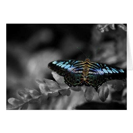 Tarjetas de nota del aterrizaje de la mariposa