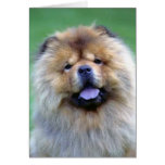 Tarjetas de nota del perro chino de perro chino