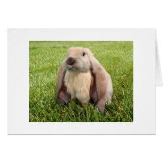 Tarjetas de nota inglesas del conejo del Lop