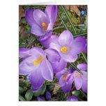 Tarjetas de nota púrpuras del azafrán