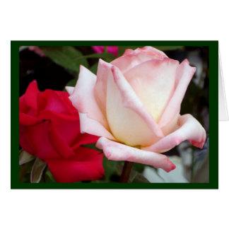 Tarjetas de nota rosadas rojas de los rosas