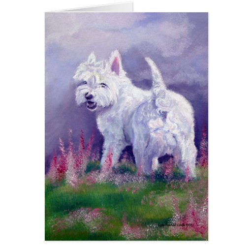 Tarjetas de Terrier blanco de montaña del oeste