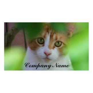 Tarjetas de visita anaranjadas del gato de Tabby