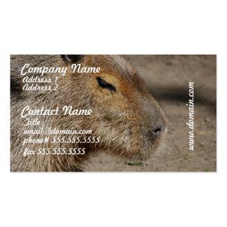 Tarjetas de visita australianas del Capybara