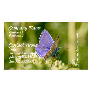 Tarjetas de visita bonitas de la mariposa