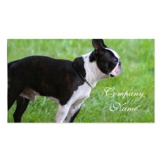 Tarjetas de visita de Boston Terrier