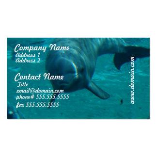 Tarjetas de visita de la estrella del delfín