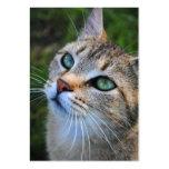 Tarjetas de visita de la fotografía del gato de Ta