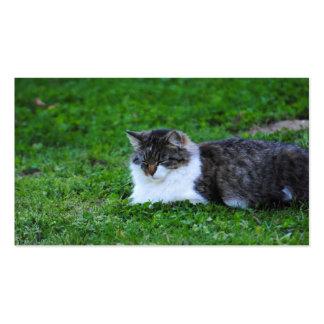 Tarjetas de visita de la fotografía del gato del t