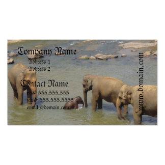 Tarjetas de visita de la manada del elefante