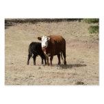 Tarjetas de visita de la vaca y del bebé