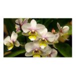 Tarjetas de visita de las orquídeas