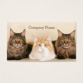 Tarjetas de visita de los gatos de coon de Maine