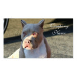Tarjetas de visita de Staffordshire Terrier americ