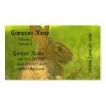Tarjetas de visita del conejo de conejito