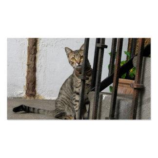 Tarjetas de visita del gato de Tabby