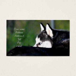 Tarjetas de visita del husky siberiano