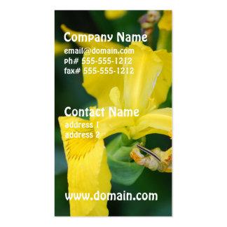 Tarjetas de visita del iris amarillo