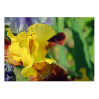 Tarjetas de visita del iris barbudo 1