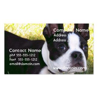 Tarjetas de visita del perrito de Boston Terrier