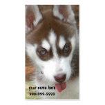 Tarjetas de visita del perrito del husky siberiano