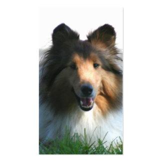 Tarjetas de visita del perro pastor de Shetland