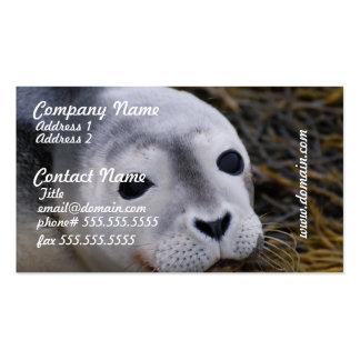 Tarjetas de visita dulces de la cría de foca