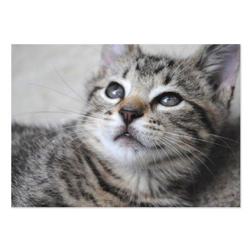 Tarjetas de visita grises del gatito