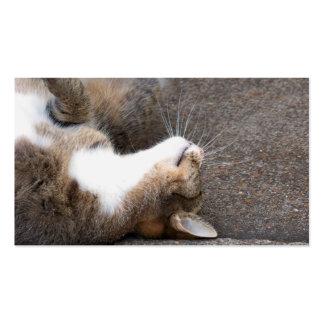 Tarjetas de visita juguetonas del gato de Tabby