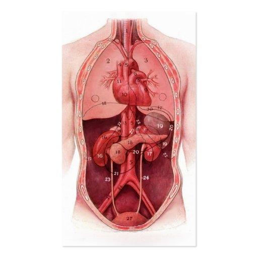 tarjetas de visita médicas de las partes del cuerp