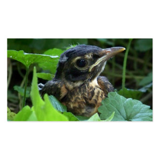 Tarjetas de visita tempranas de Robin Hood (pájaro