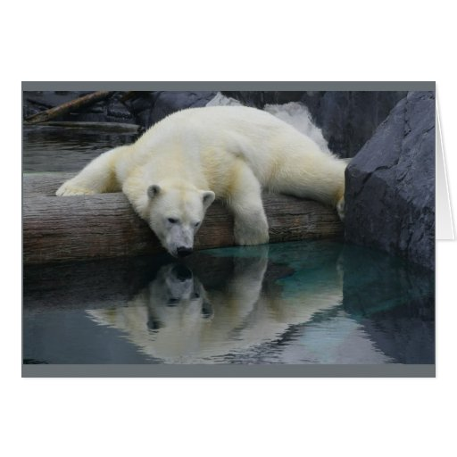 Tarjetas del oso polar - reflexiones
