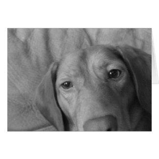 Tarjetas del perrito (espacio en blanco)