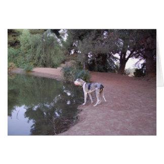Tarjetas del perro de la orilla del lago
