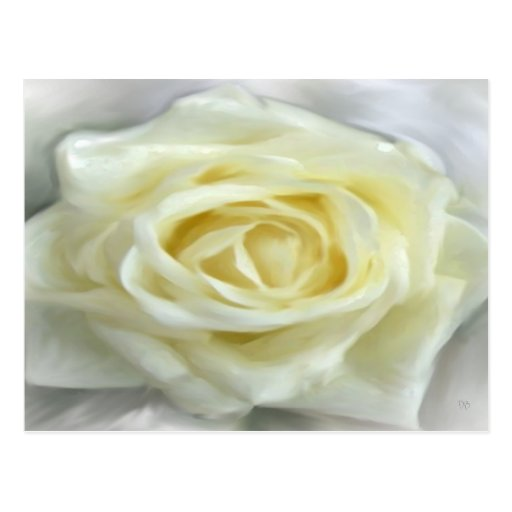 Tarjetas del rosa blanco postales