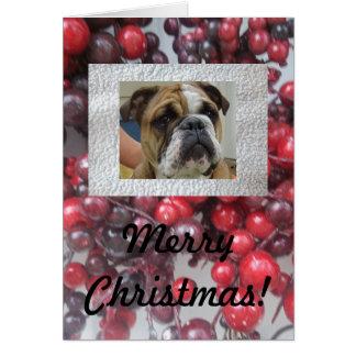 ¡Tarjetas inglesas de las Felices Navidad del dogo