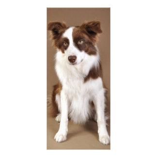 Tarjetas lindas del estante de los perros tarjetas publicitarias a todo color