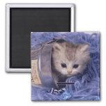 Tarjetas preciosas de la foto del gato y del gatit imanes de nevera