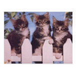 Tarjetas preciosas de la foto del gato y del postal