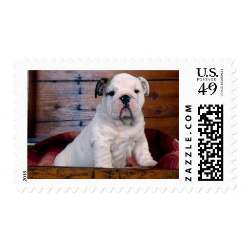 Tarjetas queridas de las fotos del perro, regalos sellos