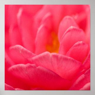 Tarjetas rosadas del diseño floral y productos de póster