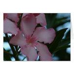 Tarjetas rosadas del Oleander