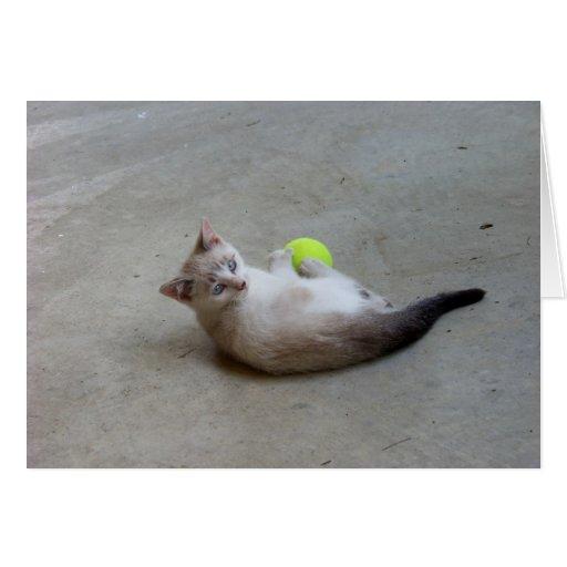 Tarjetas salvajes del gatito de julio