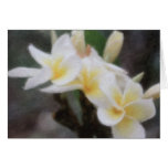 Tarjetas tropicales hawaianas del Plumeria