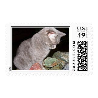 Tarjetas y franqueo curiosos del gato sello postal