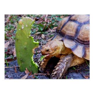 Tarjetas y regalos del arte de la tortuga postales