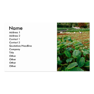 Taro field Double-Sided standard business cards (Pack of 100)