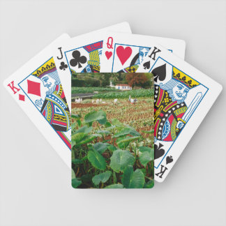 Taro field bicycle playing cards